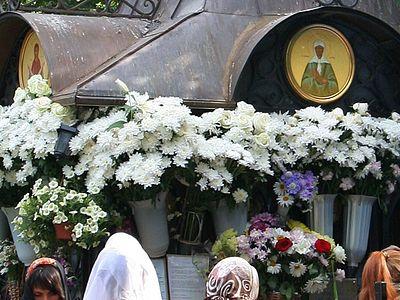 Доставка цветы по московской области 22 васильков ромашек