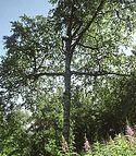 The Tree Heals the Tree