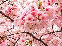 Особое время цветения христианской души