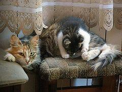 Кошачий спецназ