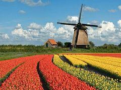 Нидерланды: миссия Церкви в либеральной стране