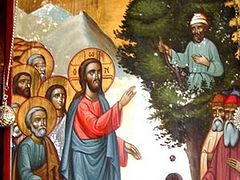 To Seek that which was Lost: A Sermon on Zacchaeus Sunday