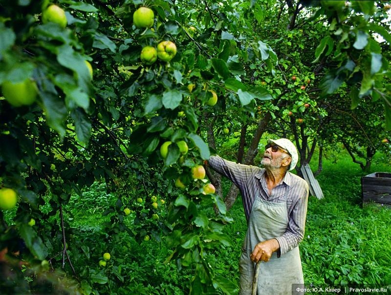 Николай Смирнов в яблоневом саду