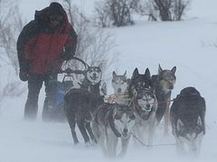 Priest takes part in dog team race on Kamchatka