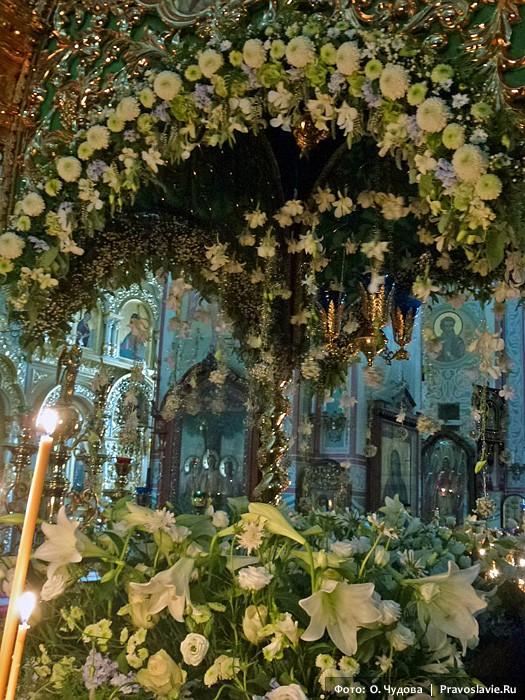 Цветы фото папоротник в саду великобритании такая