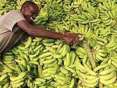 Не соли мои бананы!
