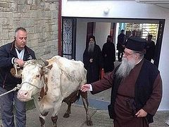 Greece: Metropolitan testifies to a miracle that happened to him