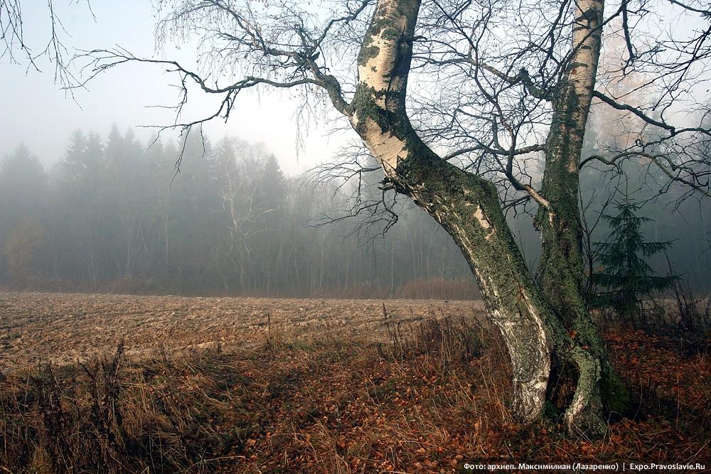 Осенняя нива