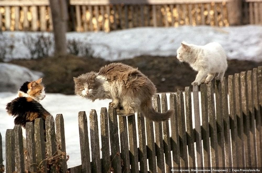 Коты-разбойники