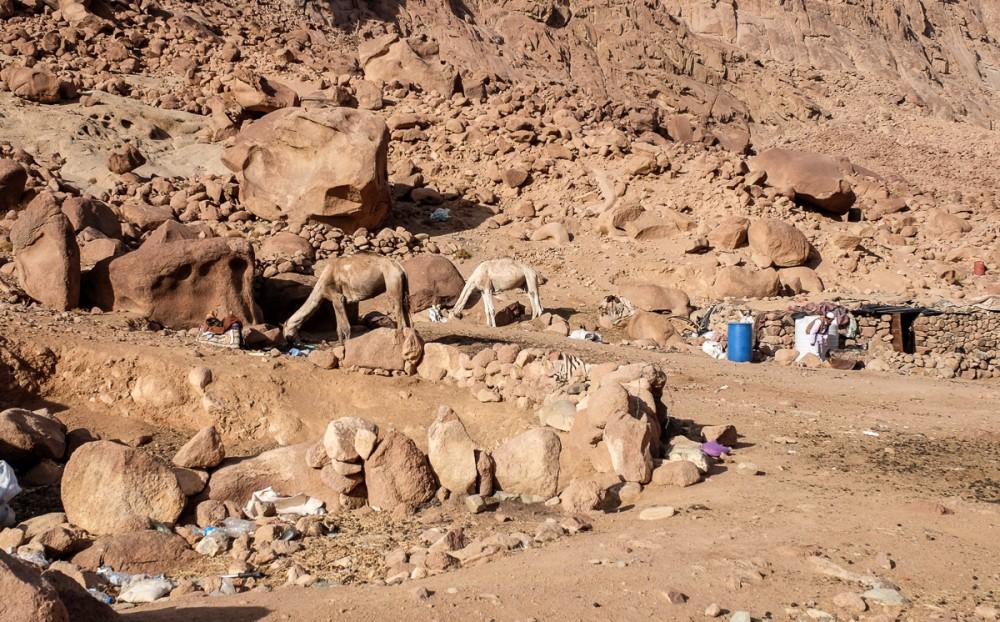 Конечная станция верблюдов со стороны монастыря. Тут они дожидаются своих ездоков, отдыхая между камнями