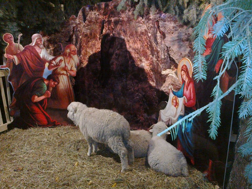 A new tradition for Russians: manger scenes with live animals.