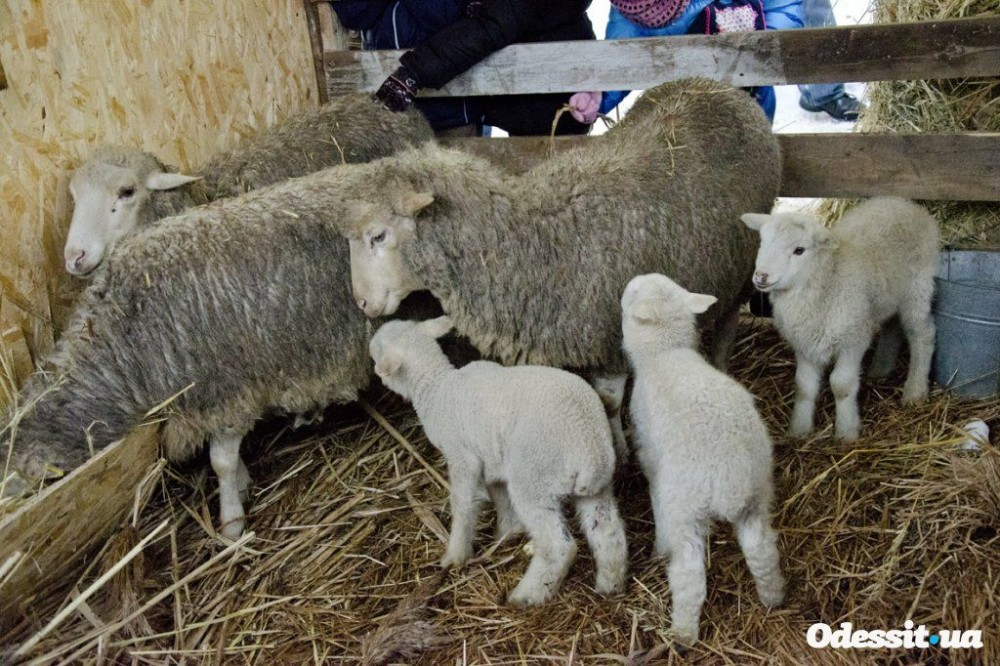 There are even little lambs.