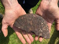 Lindisfarne monastery evidence found by amateur archaeologist