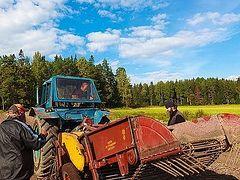 Valaam monks gather first grain harvest in seventy-seven years
