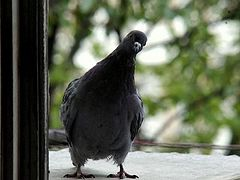 О постоянстве в молитве и птицах небесных