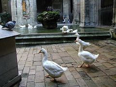 How the Geese of St. Eulalia Saved Barcelona, or Islamic Terrorists from Morocco Against the Holy Family of Christ