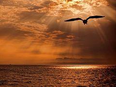 «Я вспомнил угрюмую птицу…»