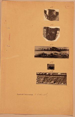 Фрагменты костей, вставная челюсть доктора Боткина и «просаленная земля» из шахты № 7, обнаруженные в районе Ганиной Ямы в 1919 году. Это все, что нам известно о таинственных фрагментах костей. Фототаблица из следственного дела Н.А. Соколова