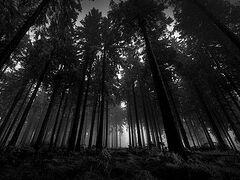Тропинка из черного леса