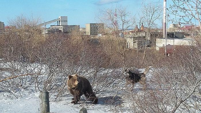 Медвежонок в поселке Эвенск. Фото из архива священника Владимира Зимонова