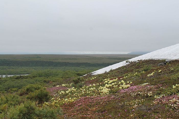 Цветение рододендронов. Фото из архива священника Владимира Зимонова
