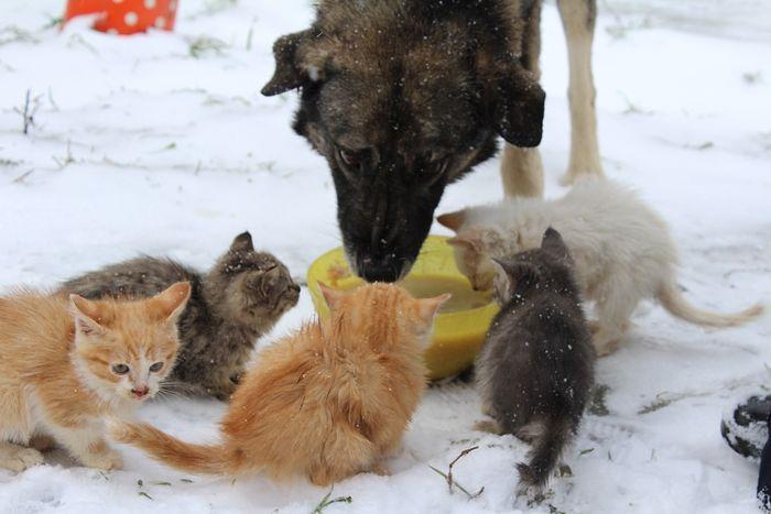Наши животные