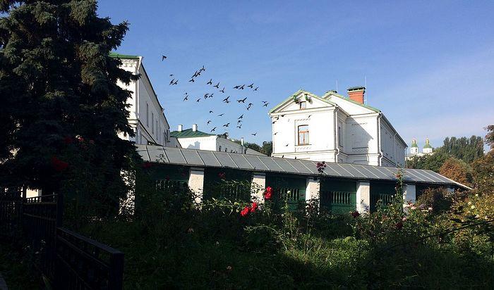 Птицы над Лаврой