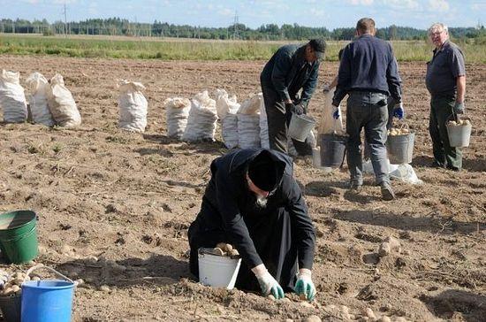 Уборка картофеля на монастырских полях