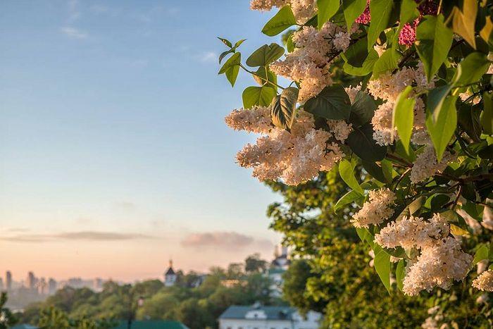 Весна в Лавре. Фото: архим. Варлаам (Бурнос)