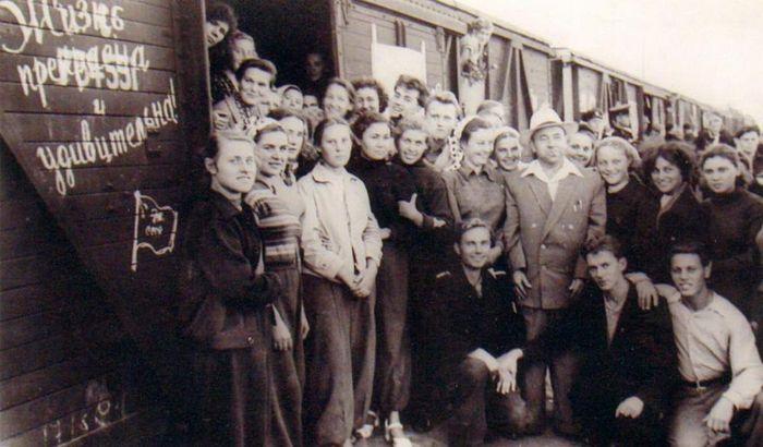 На целину 1957 год