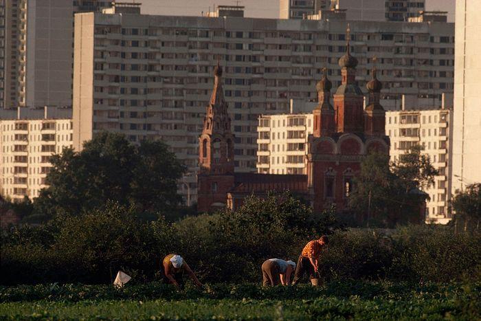 Огороды в Тропареве. 1978 год