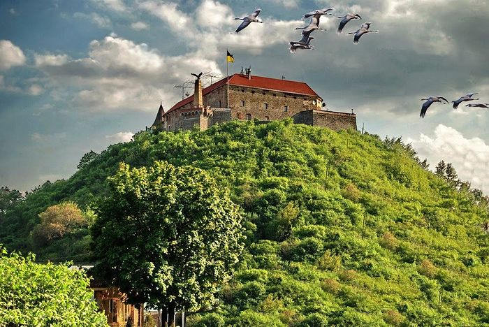 Cranes fly over the Castle of Mukachevo. Ok.ru