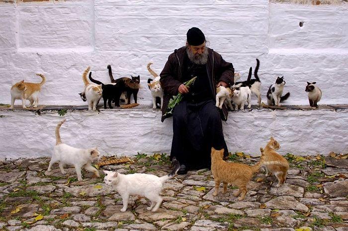 Геронда Григорий и кошки