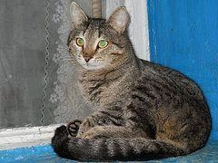 Время серого кота