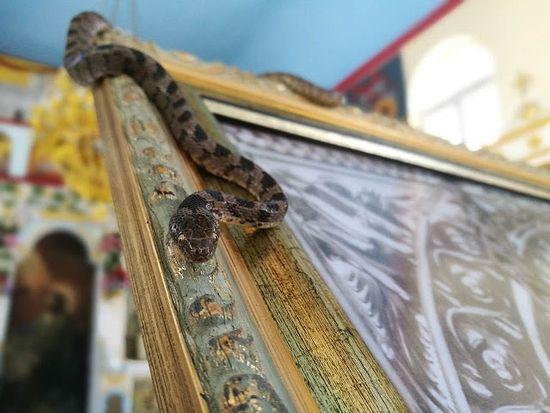 Photo: www.johnsanidopoulos.com