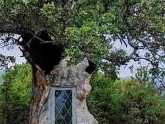 Χτισμένο σε δέντρο 300 ετών ένα εκκλησάκι του Αγίου Παΐσιου!