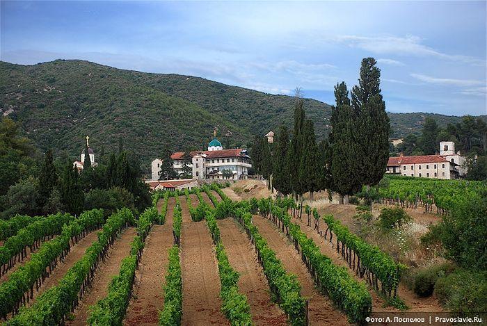 Plantation at St. Panteleimon's Monastery