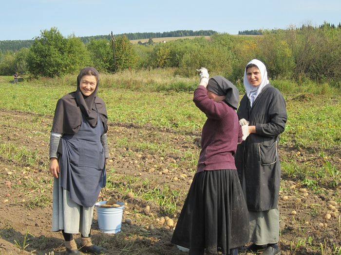 In the potato fields