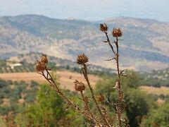 Tell Mar Elias: Ο Τόπος όπου γεννήθηκε ο Προφήτης Ηλίας