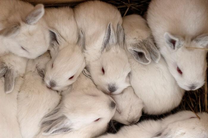 Много новых кроликов