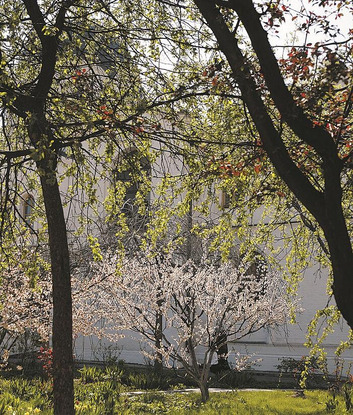 Зачатьевский монастырь. Весна