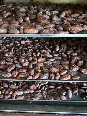 Обжарка какао-бобов