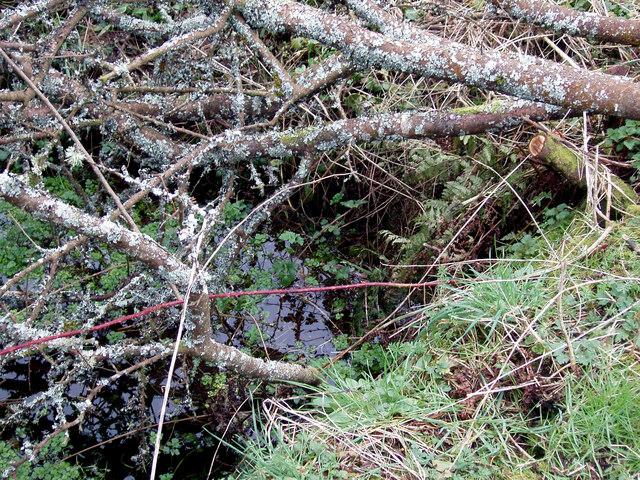 Источник Св. Тейло в деревне Лланделой, Уэльс (взято с Geograph.org.uk)