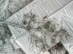 О буре в Крестовоздвиженском монастыре (США)