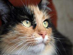 Кошка. Рассказ