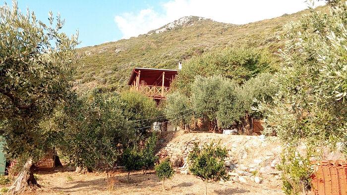Оливковый сад Яннакопулы