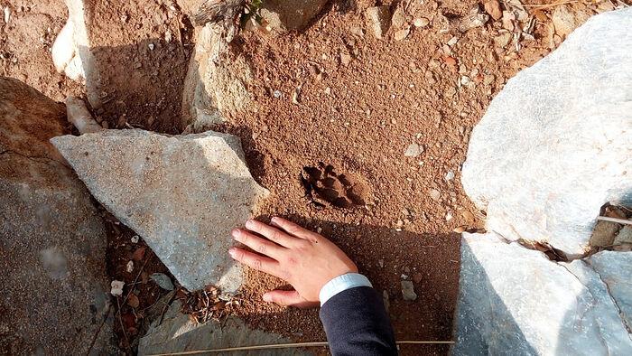 Гиены около Яннакопулы не слышны, от молитв не отвлекают