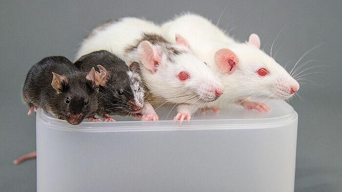 Фото: sciencemag.org