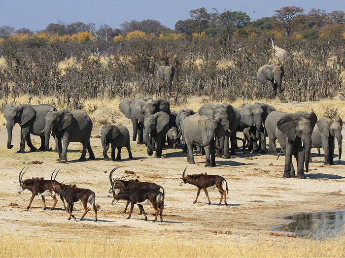A national park in Zimbabwe