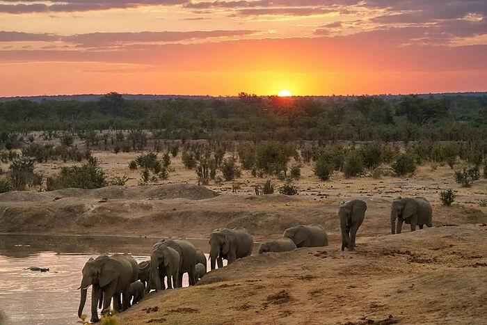 The jungles of Zimbabwe.